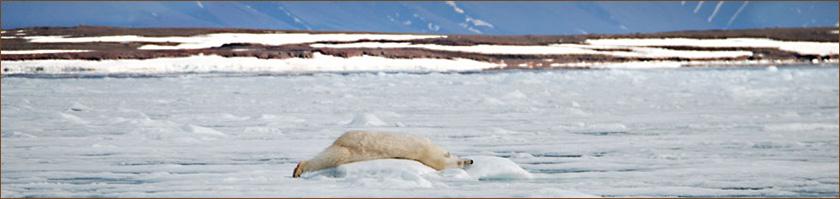 Kreuzfahrt Reisen Spitzbergen mit Wanderungen