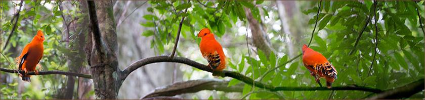 Guyana - Regenwaldreisen nach Südamerika
