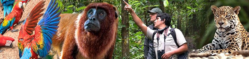 Südliche Pantanal Reise